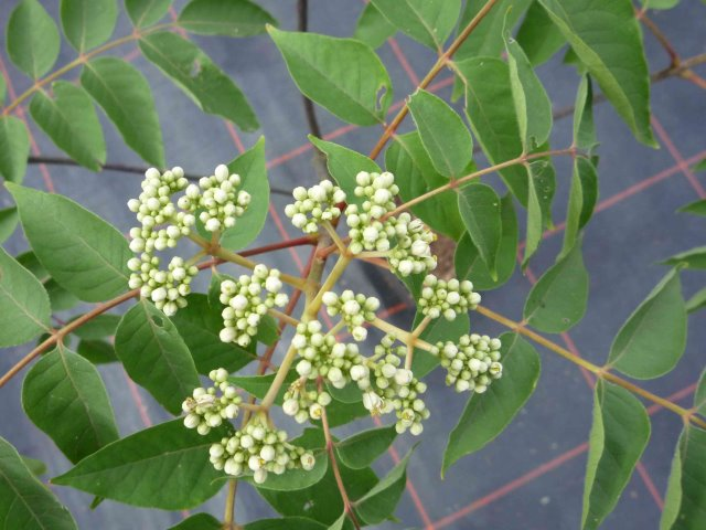 3 Jahre alte Pflanze