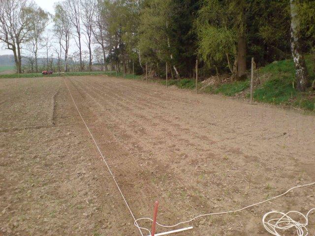 Aufpflanzen der ersten Freilandfläche V