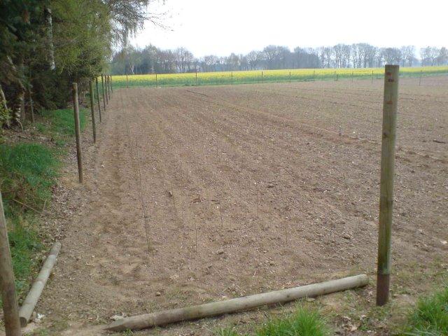 Aufpflanzen der ersten Freilandfläche