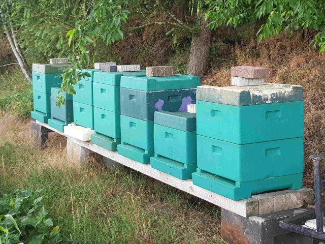 Bienenstand in Lahn