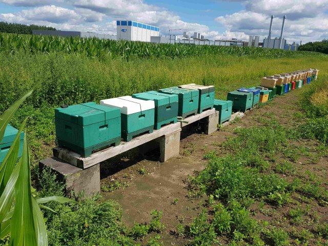 Bienenstand in Löningen mit Ablegerstand