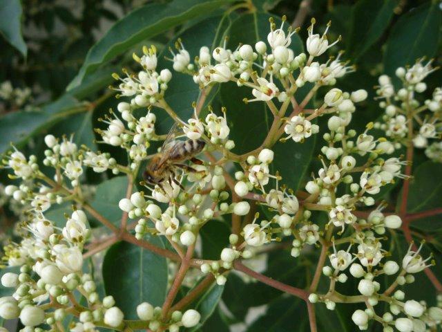 Blüten Mitte Juli