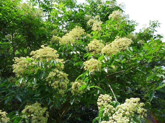 Blüten am Mutterbaum II