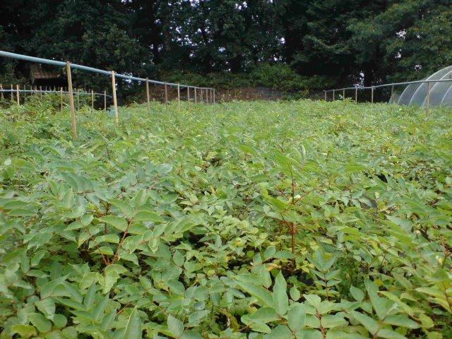 Freilandpflanzen im Hochsommer II