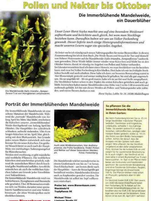 Mandelweide die Biene (2)