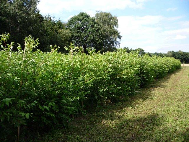 Pflanzen bis 350 cm Mitte Juli
