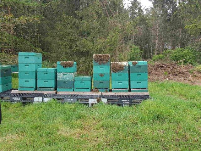 Rumhängen nach der Honigernte